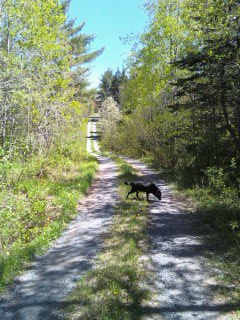 Max & I going down the gravel road in the woods