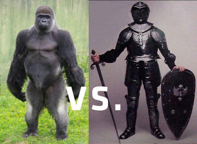 Knight Vs. Silverback Gorilla